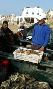 Der Fang eines ganzen Tages - Dank europäischer Fischpiraterie vor den Gewässern Westafrikas
